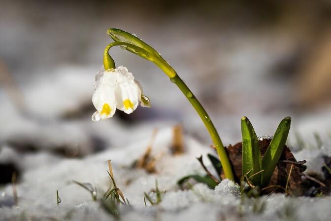 В понедельник воздух в Эстонии прогреется до 9 градусов