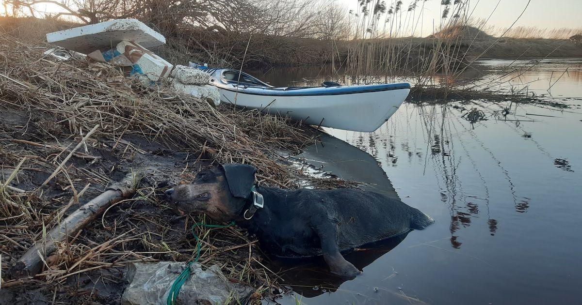 Мужчина обнаружил в реке Кейла утонувшую таксу: к ее шее был привязан камень