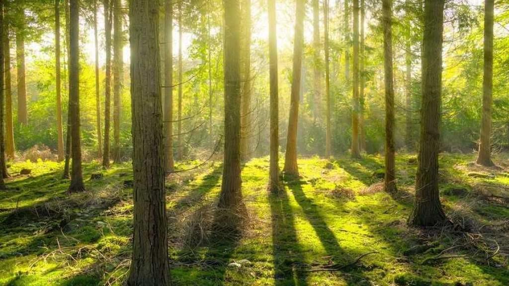 В новой лесной стратегии ЕС – охрана древних лесов и 3 млрд новых деревьев