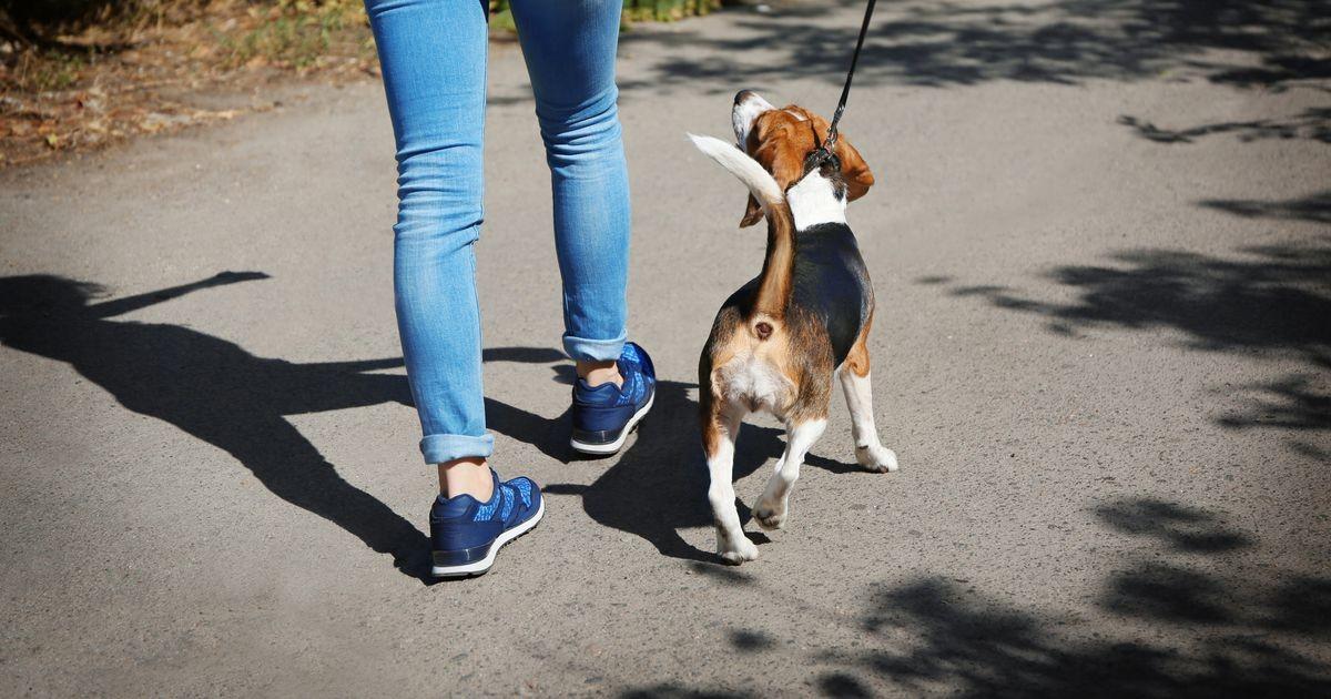 МуПо призывает владельцев собак к порядку