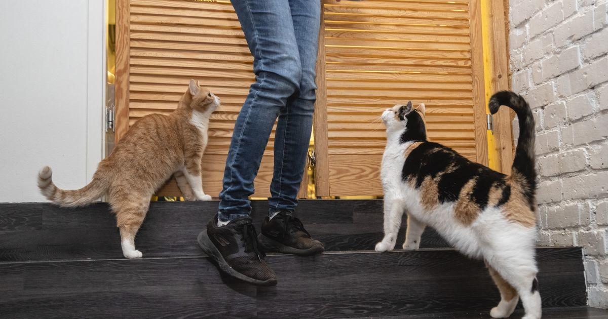 Фото: в кошачьем кафе прошел «вечер только для взрослых»