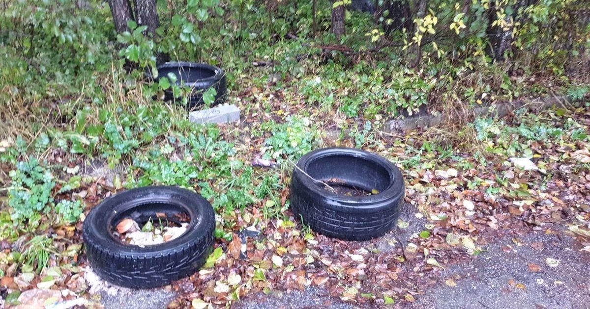 Автовладельцы, имейте совесть! Вместо свалки шины вновь оказываются в лесу