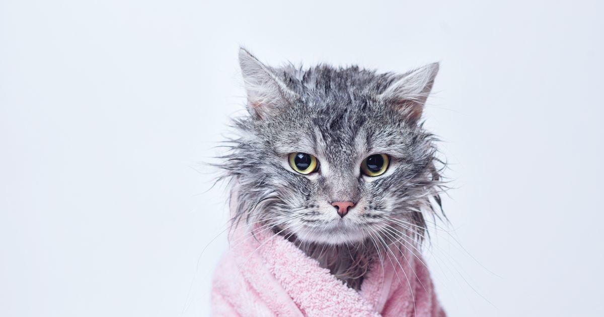 На какие действия хозяина может обидеться кошка, и как в этом случае стоит поступить