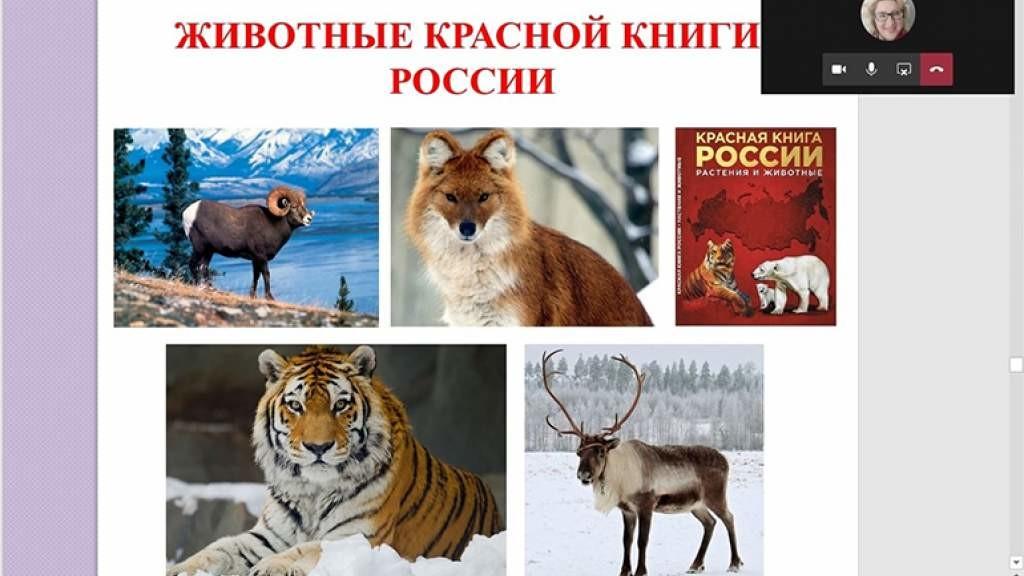 Словацкие студенты узнали о редких животных и растениях, занесённых в Красную книгу России