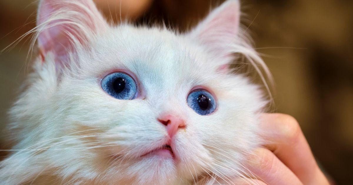 Почему жить с кошкой полезно для здоровья: десять доказанных фактов