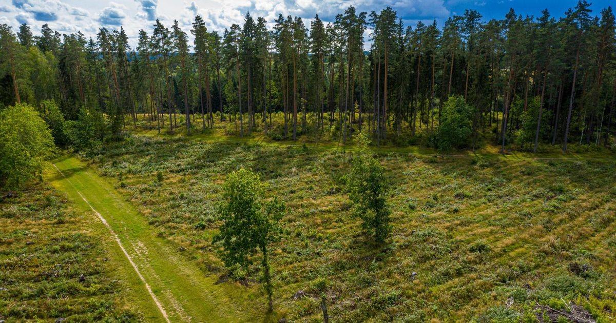 Правительство планирует в срочном порядке засекретить данные по лесам Эстонии