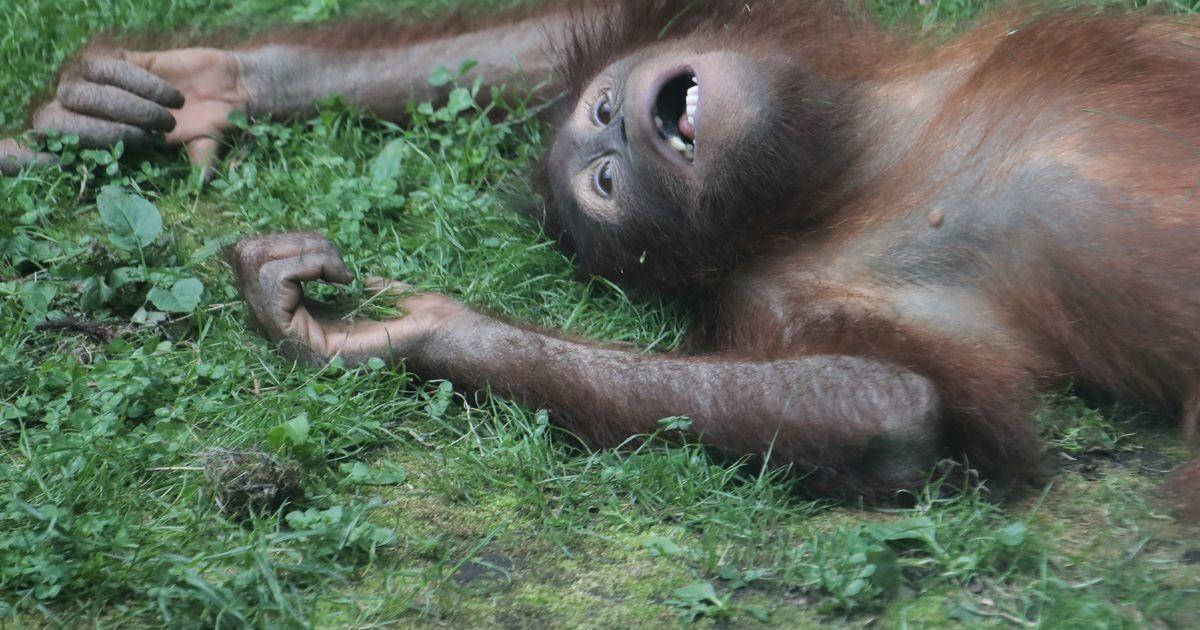 Смотрите лучшие фотографии животных за эту неделю