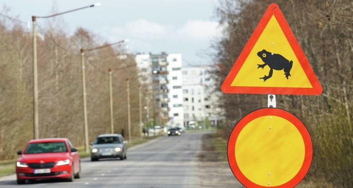 Осторожно, лягушки! В Эстонии началась миграция земноводных, находящихся под охраной