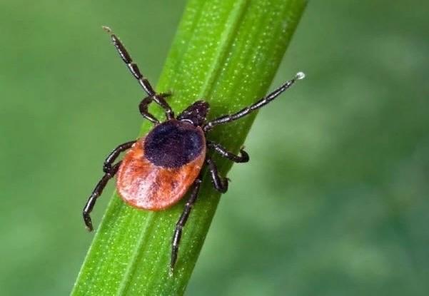 Не на правах рекламы: как предотвратить и смягчить последствия укусов насекомых