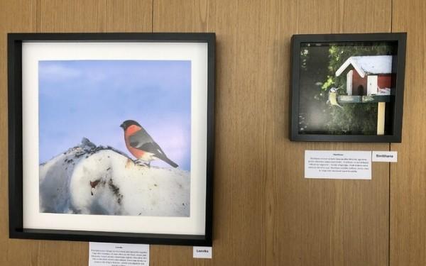 Удивительный мир пернатых: в Хаапсалу открылась фотовыставка, посвященная птицам