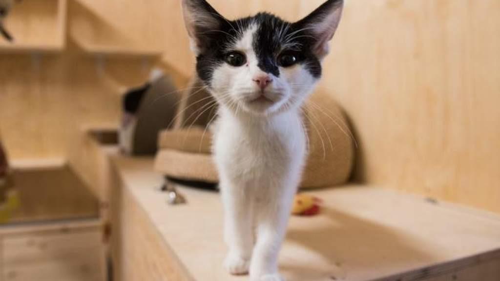 Жестоко убивший кошку и котенка житель Вырумаа наказан общественными работами