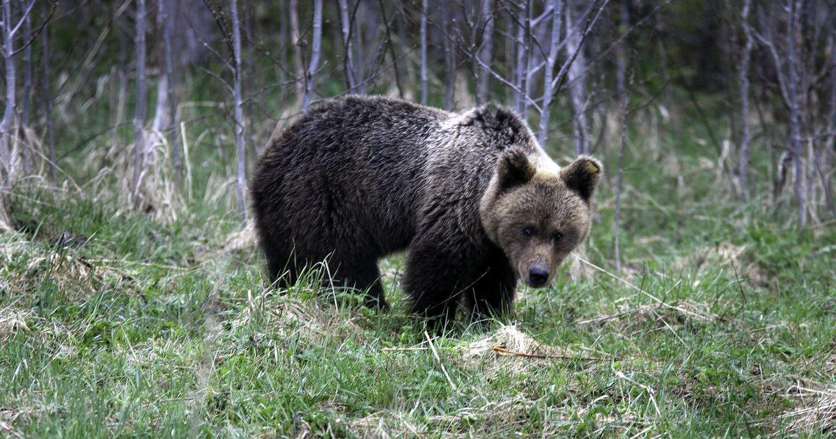 Житель Эстонии на тропе здоровья встретился с медведем
