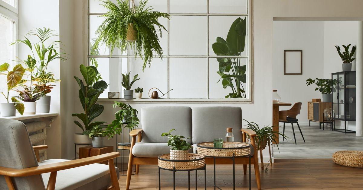 Какие растения притягивают в жизнь любовь, счастье и здоровье?