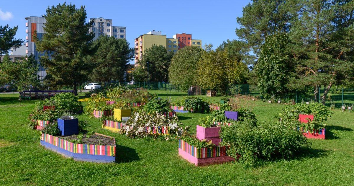 В парке Таммсааре открылась выставка столичных учебных огородов