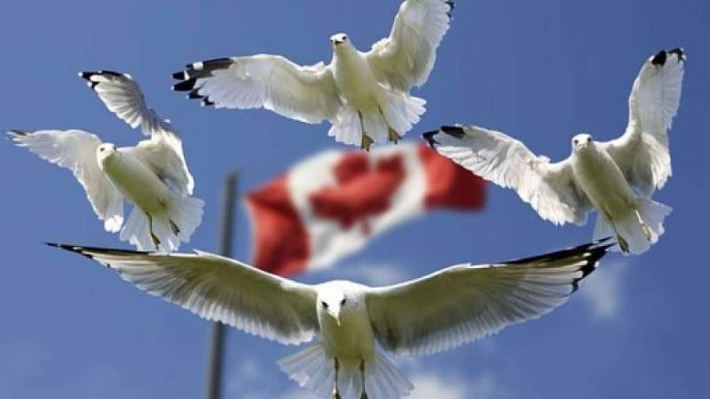 Соотечественники помогают жителям Канады справиться с последствиями торнадо