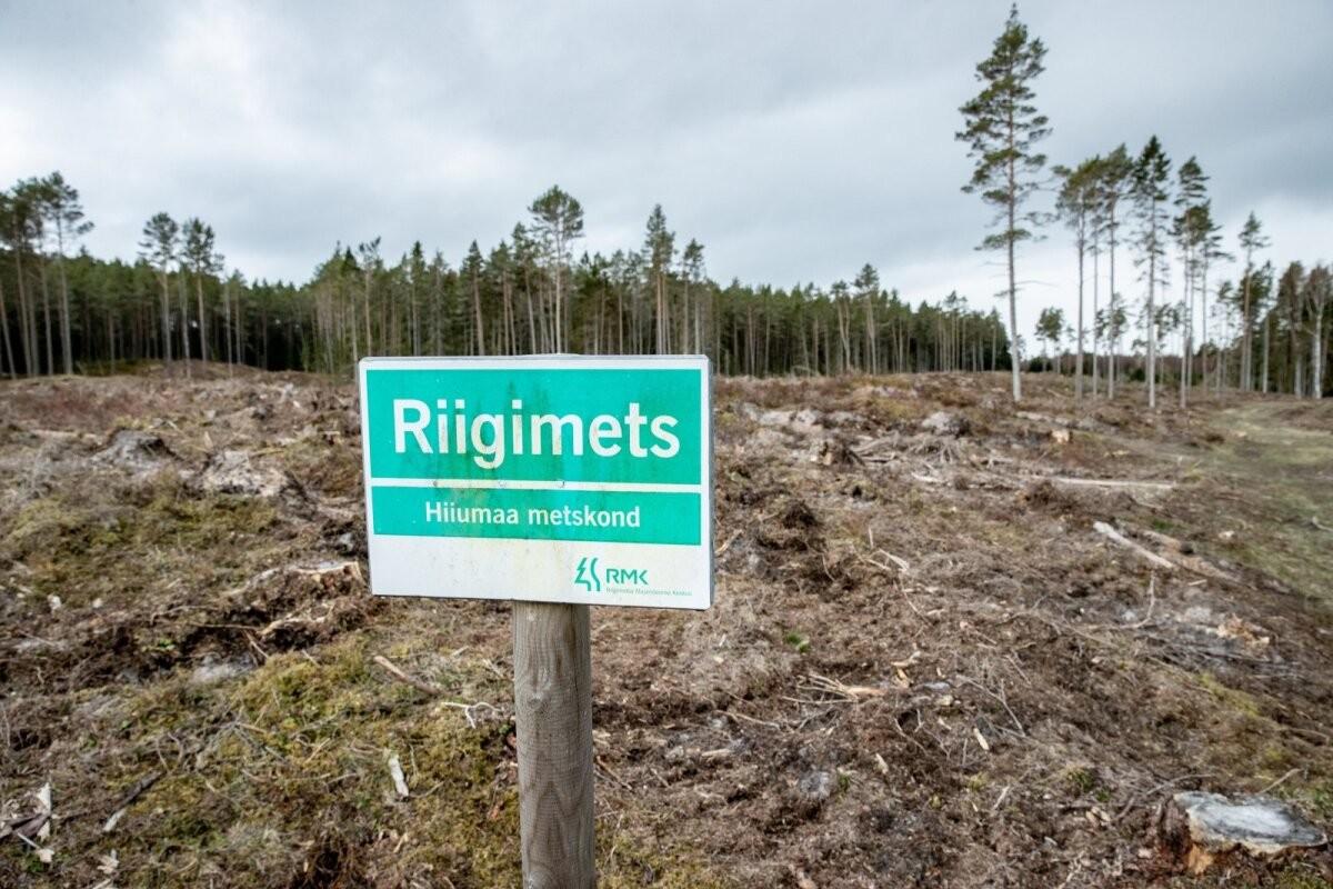 Рекордный сезон высадки лесов получает достойное завершение в виде осенней посадки