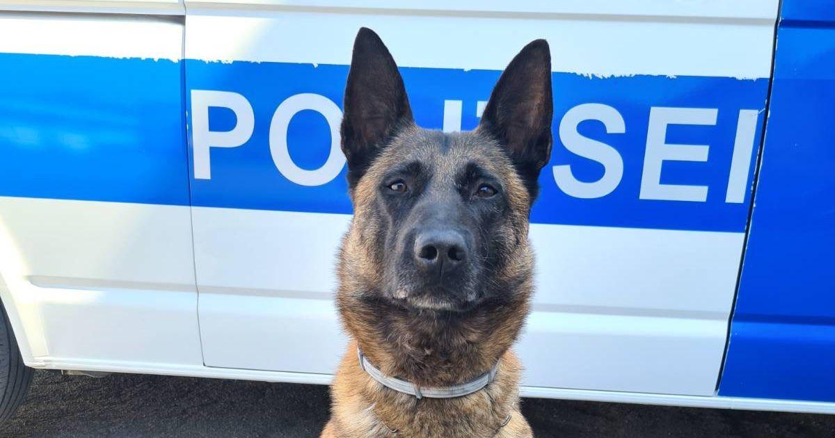 Полицейская собака нашла спрятанные в попавшем в ДТП автомобиле наркотики