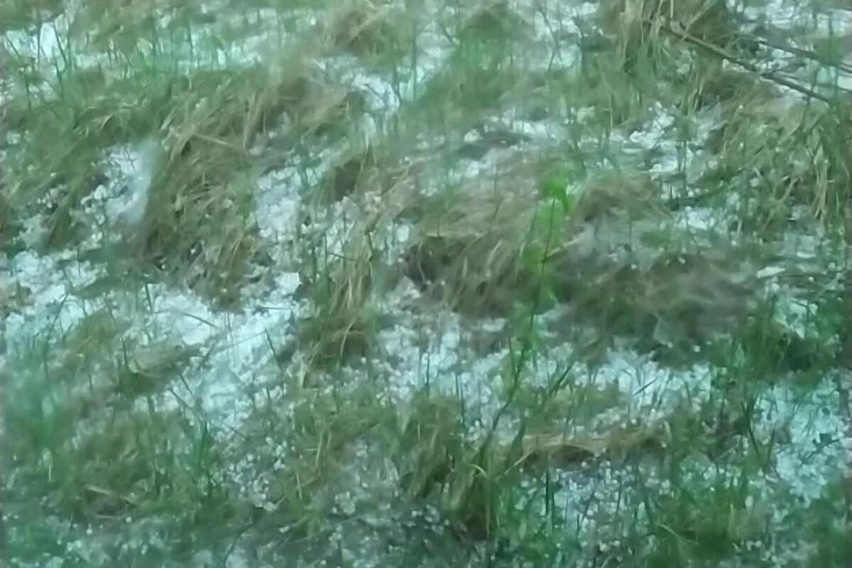 ВИДЕО | В Пылвамаа майский град укутал землю белым ковром