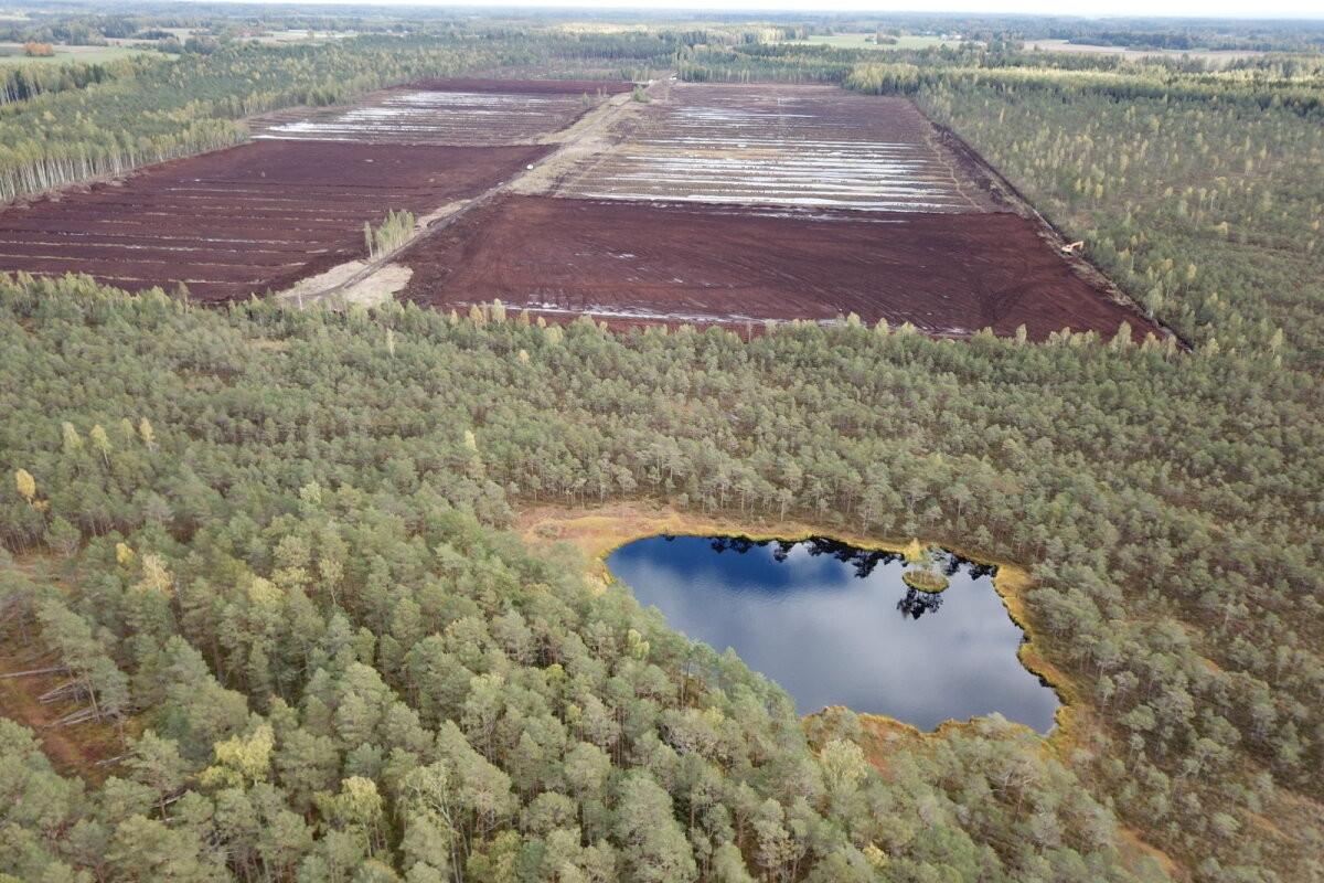 Зачем на болоте Вырумаа начинают сеять торфяной мох?