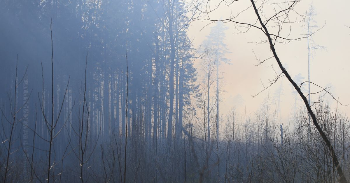 В волости Ляэне-Нигула из-за молнии загорелся лес