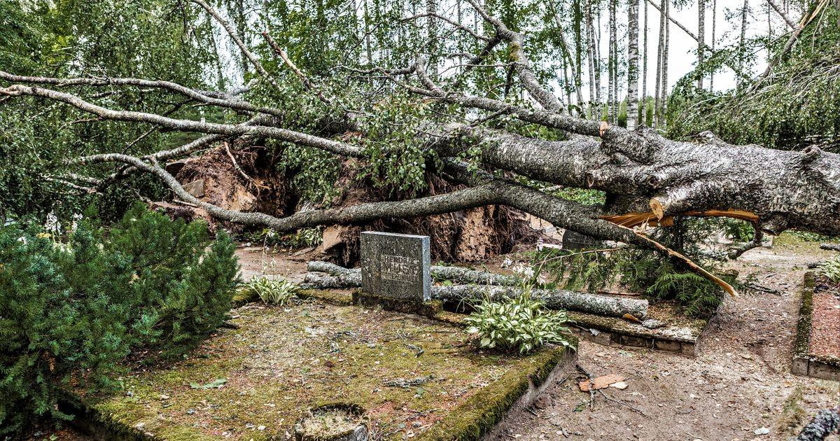 Сильный ветер повалил деревья на Пярнуском уездном кладбище