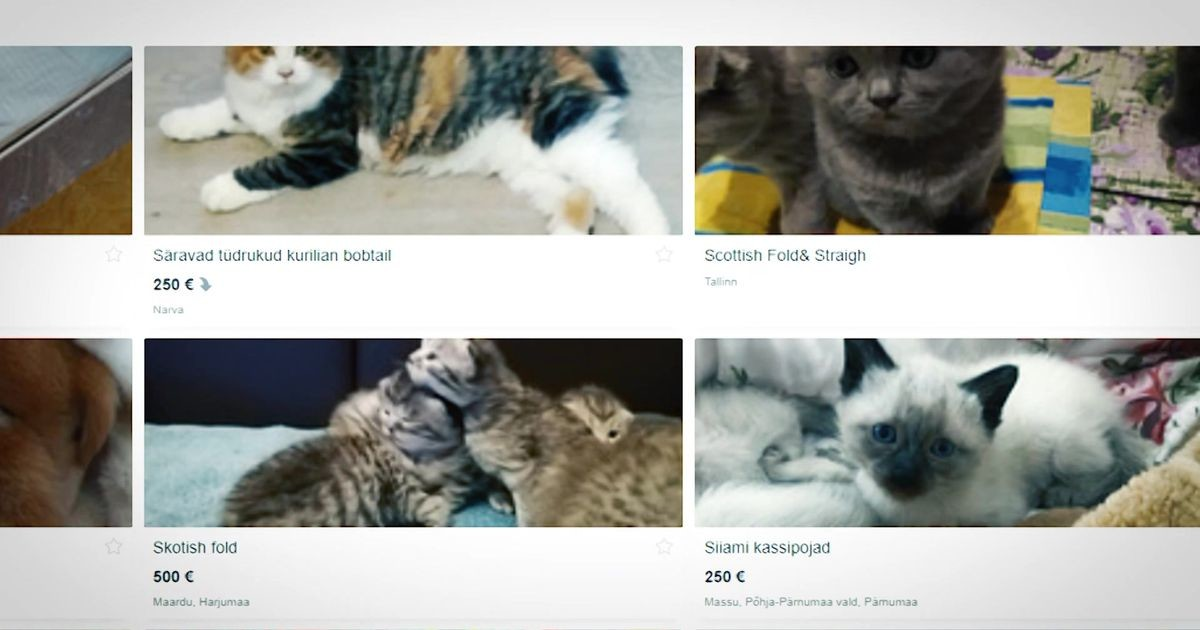 """""""Оксана, она же Ксения"""": в Таллинне процветает торговля смертельно больными котятами"""