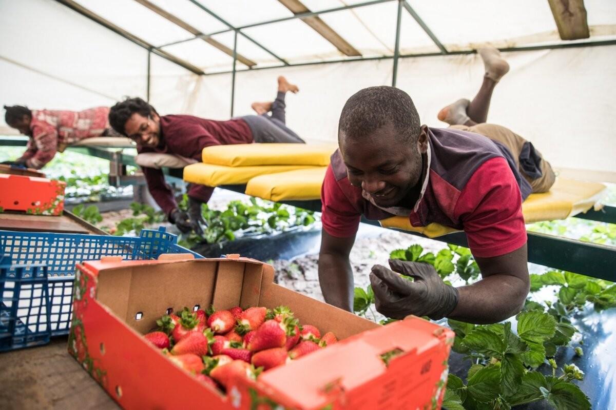 Хозяйка фермы: иностранный работник надежнее эстонского, он никуда не уедет в разгар сезона
