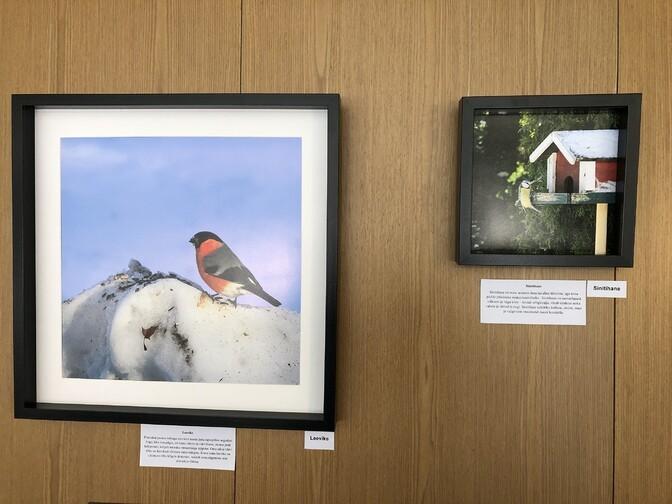 Удивительный пир пернатых: в Хаапсалу открылась фотовыставка, посвященная птицам
