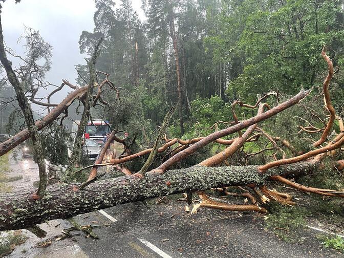Спасатели: поваленные деревья убирают в порядке приоритета