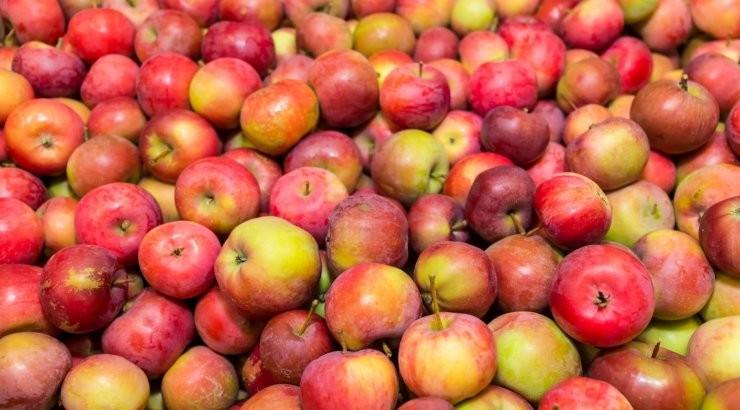На этих выходных в Таллинне пройдет ежегодный фестиваль яблок