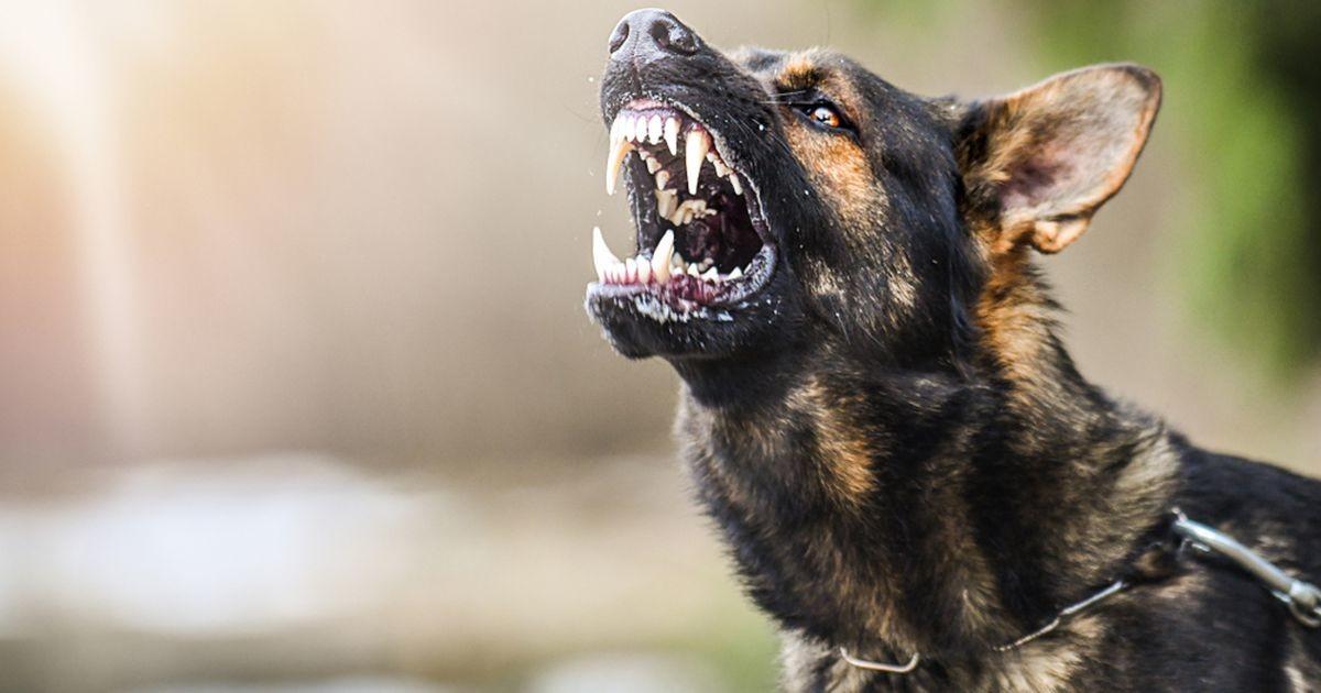 Прогулка с собакой в Таллинне обернулась кошмаром: пес укусил девушку за лицо