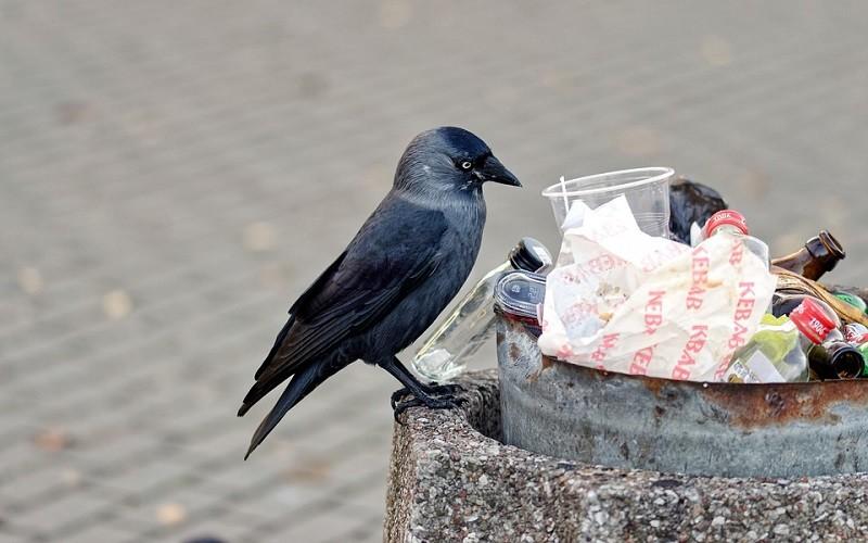 Тайны мусорной корзины — почему еда отправляется на помойку