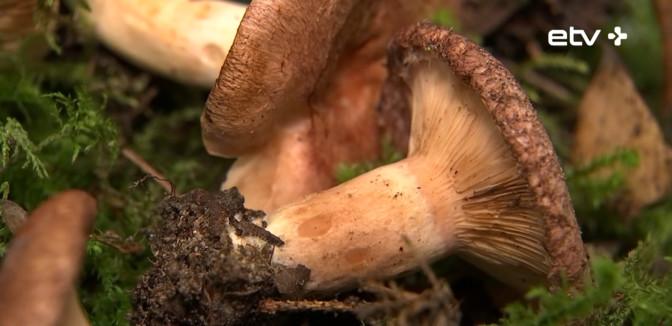 Тартуский дом природы рассказывает о грибах