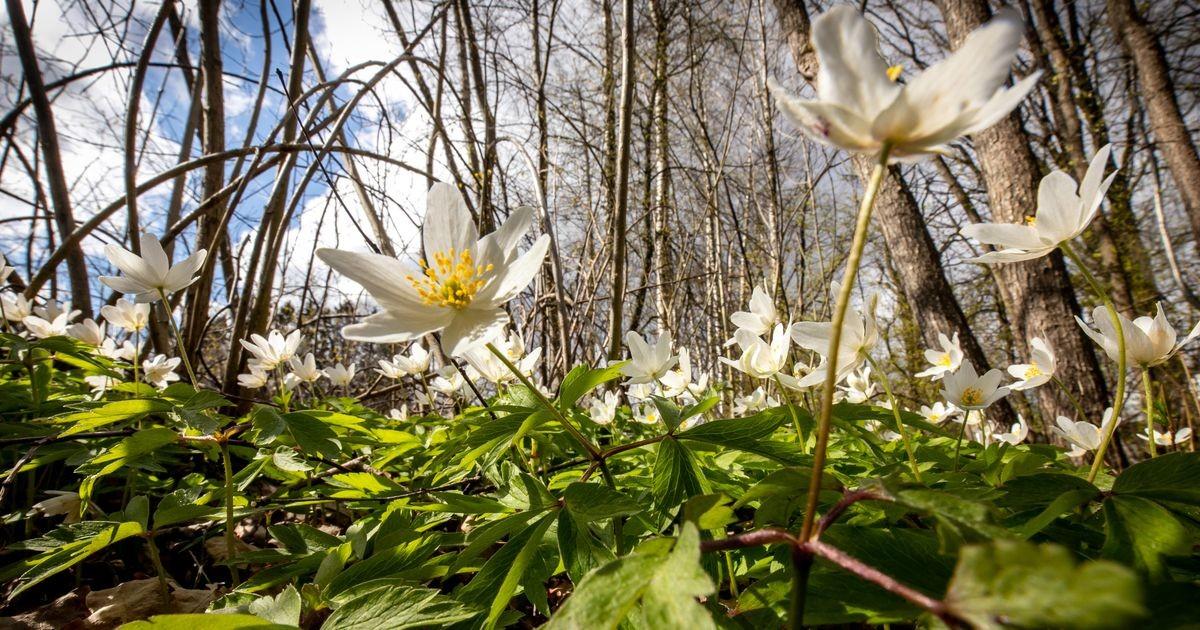 Синоптики: весна вступает в свои права