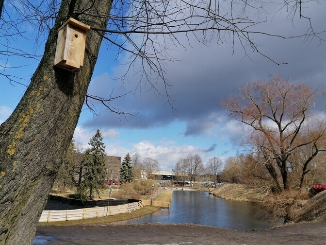 В центре Таллинна на Башенной площади и в Тоомпарке установили домики для синиц