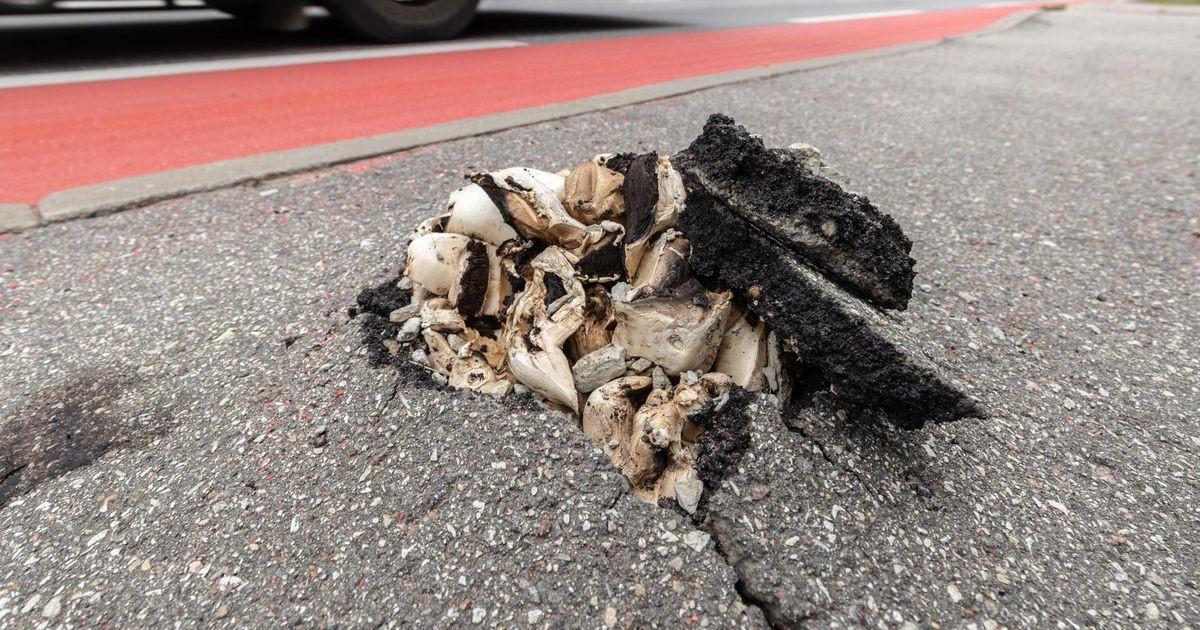 Прямо в центре города сквозь асфальт пробиваются грибы