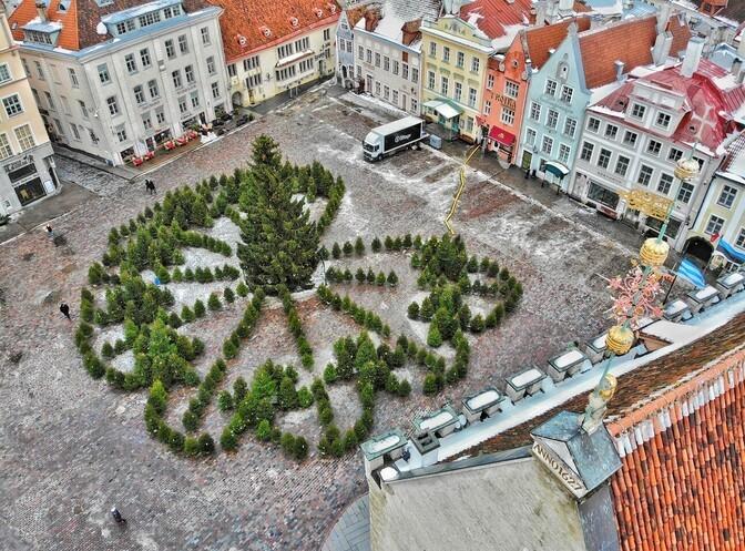 Ратушную площадь в Таллинне украсил лабиринт из елок
